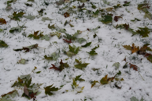 green leaves on snow