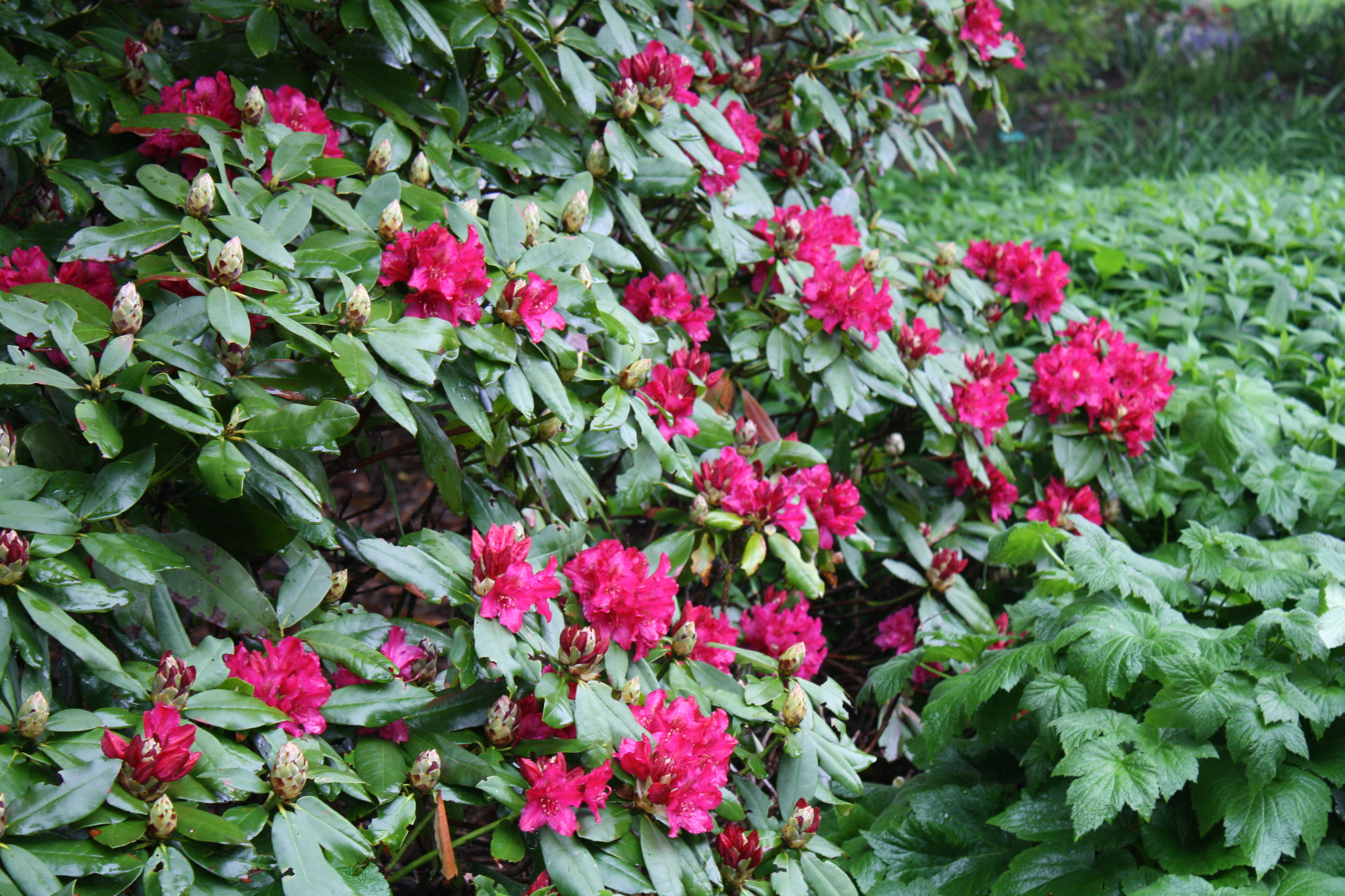 May 2011 uri botanical gardens blog rhodie izmirmasajfo