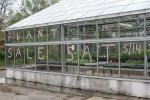 plant sale greenhouse