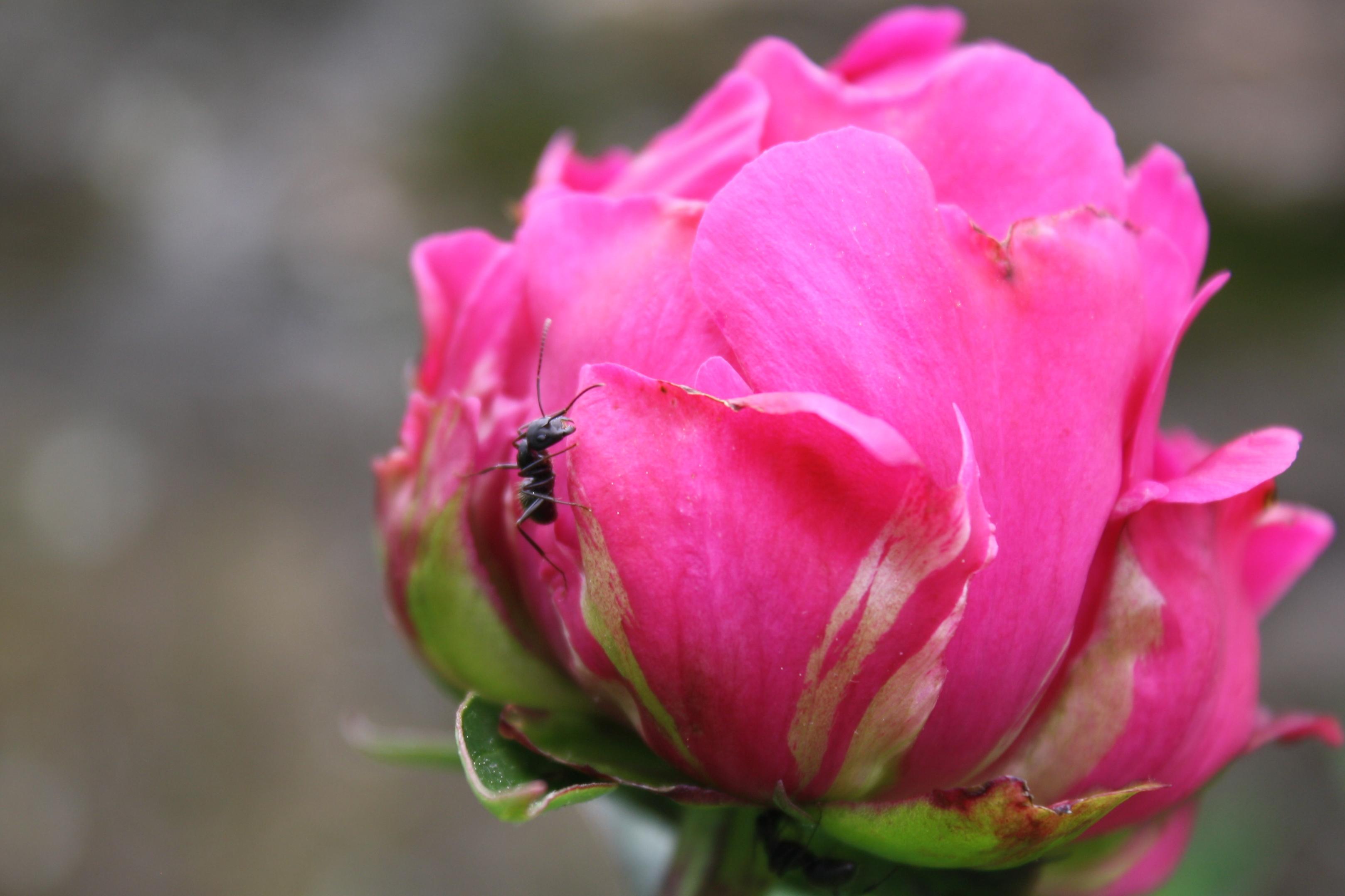 Beautiful Flowers Uri Botanical Gardens Blog Page 8