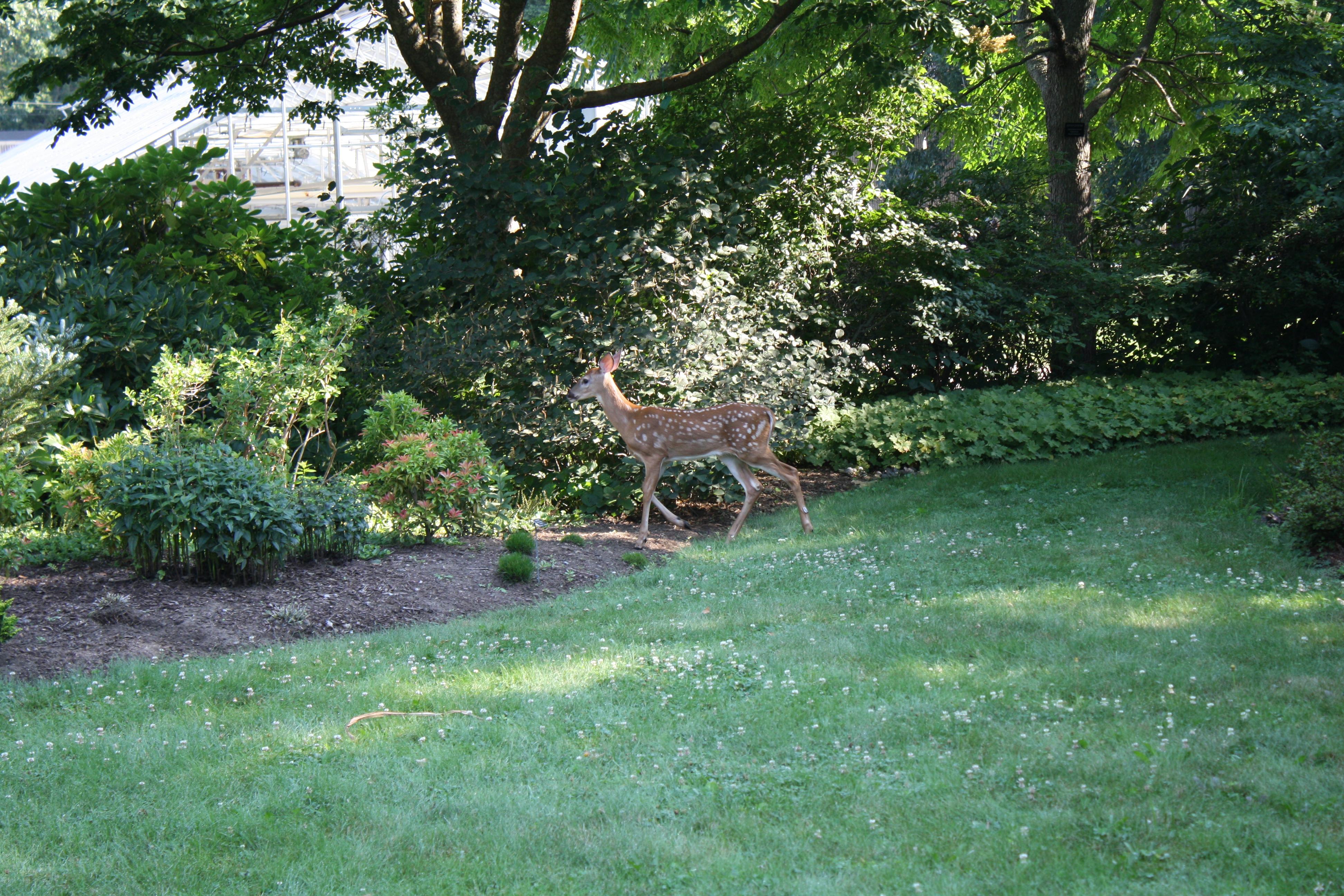 Hostas Uri Botanical Gardens Blog