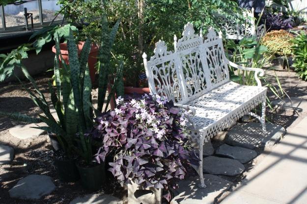 bench near pomegranate tree
