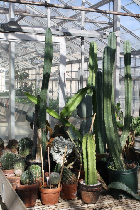 cactus group