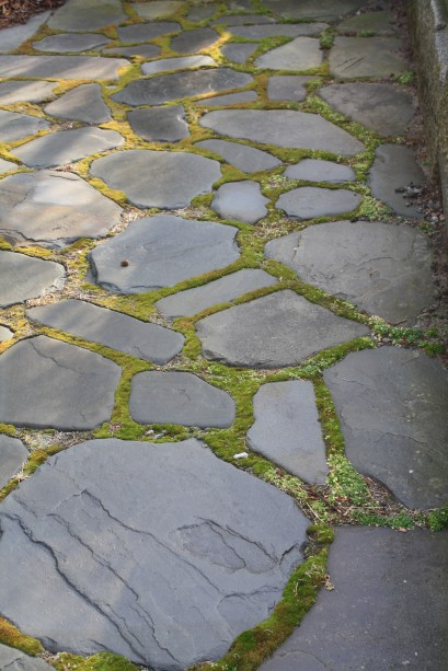 stepping stones with moss