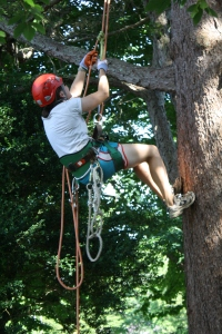climbing tree with ropes
