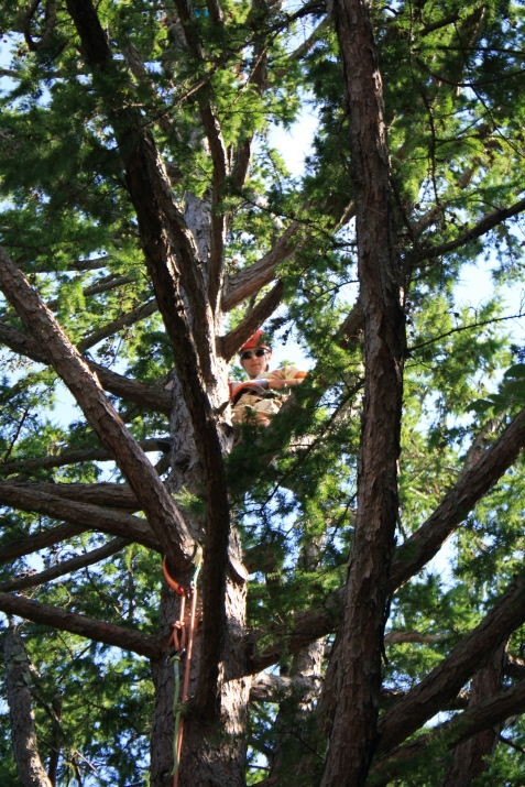 Louis in tree