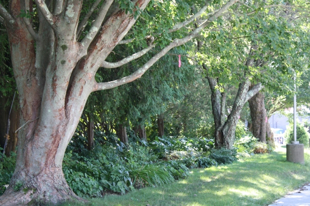 trees and shade garden
