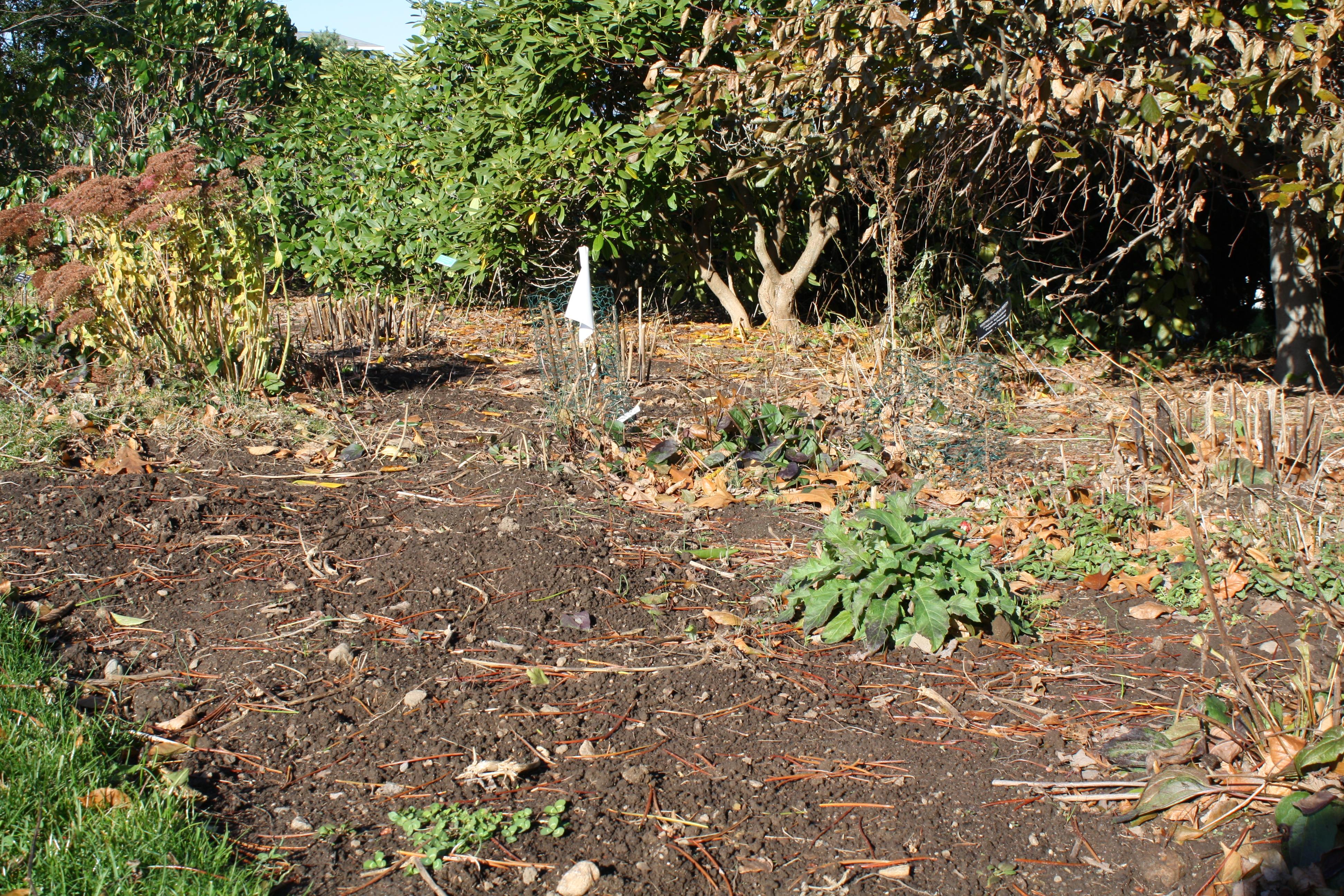 dahlias | URI Botanical Gardens Blog