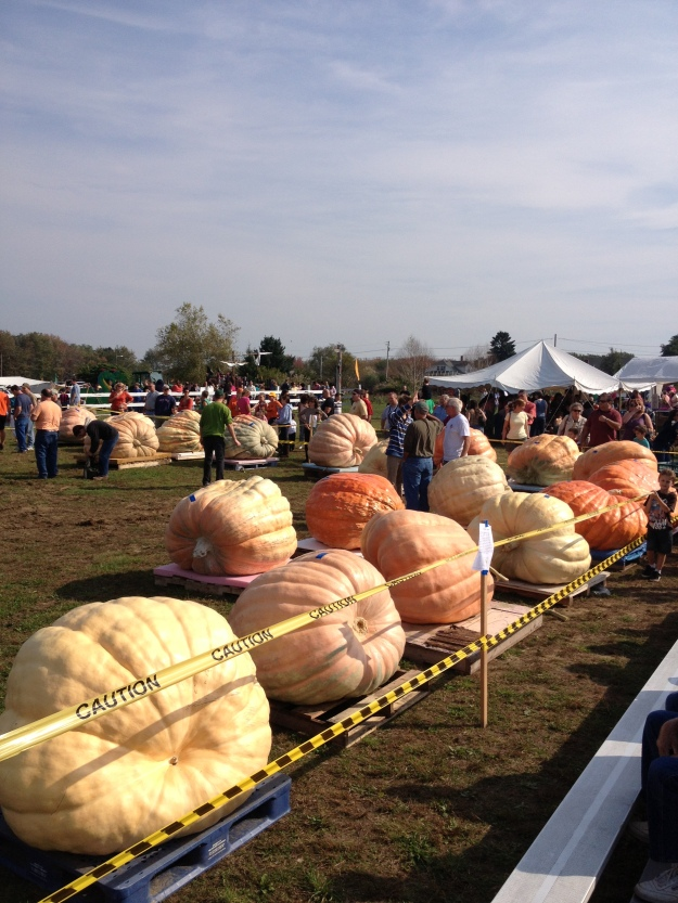 pumpkin weigh-in