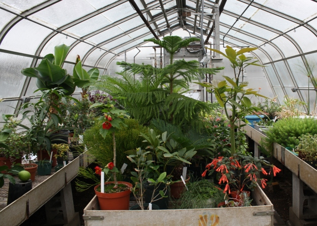 greenhouse 105