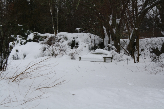 The Ericaceous Garden Monday morning after the blizzard. URI Botanical Gardens