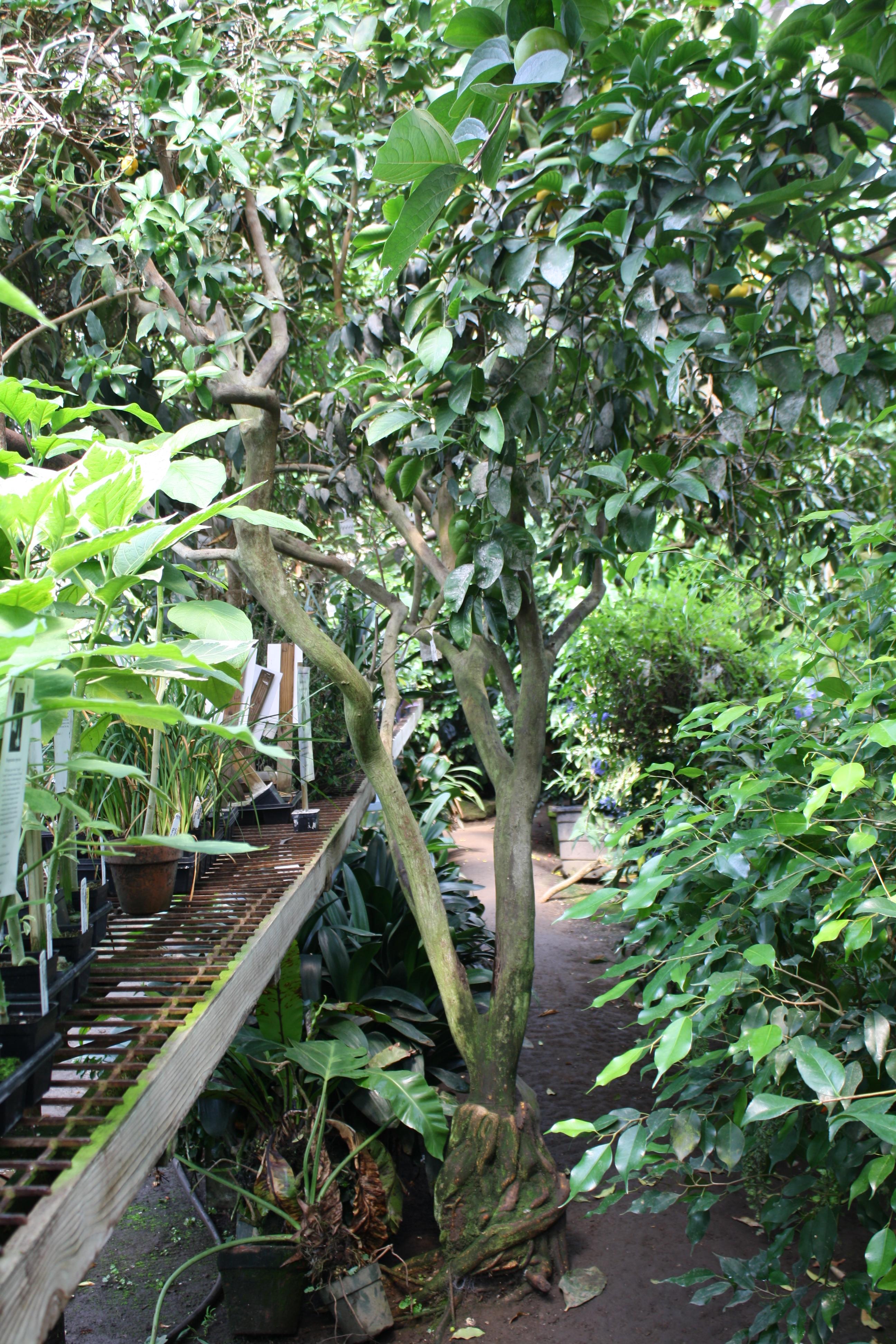 Logee 39 S Greenhouse