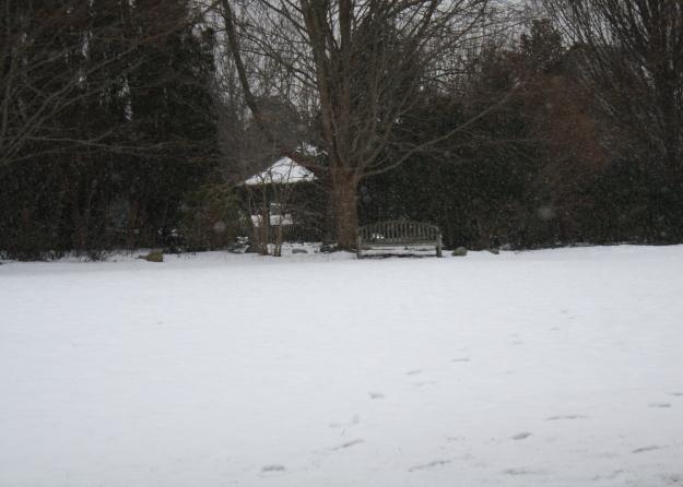 snowing in garden
