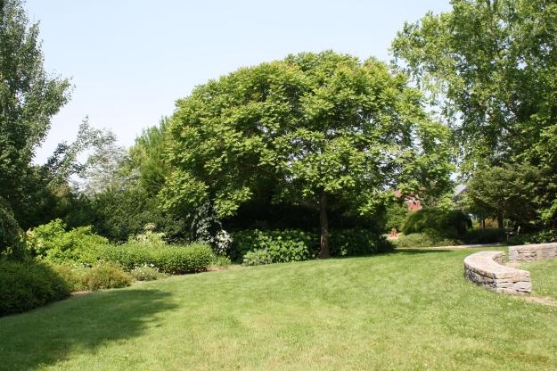 June, midsummer, green.