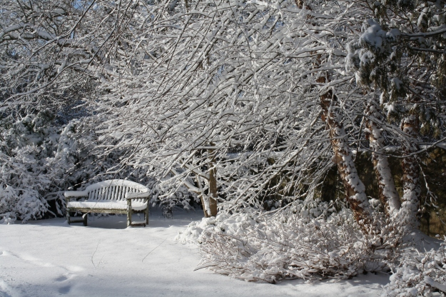 ericaceous garden in snow