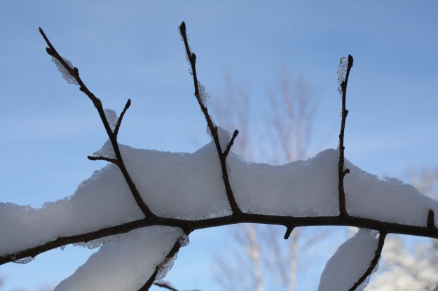 twigs with snow