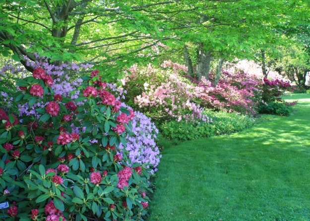 ericaceous garden