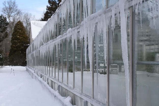 icicles on greenhouse