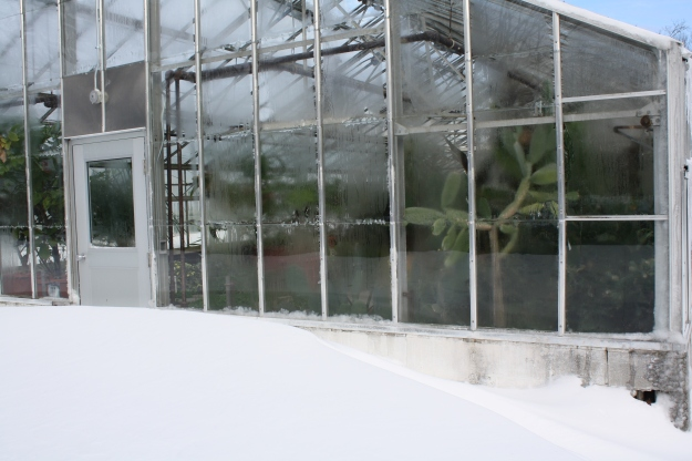 greenhouse and drifted snow