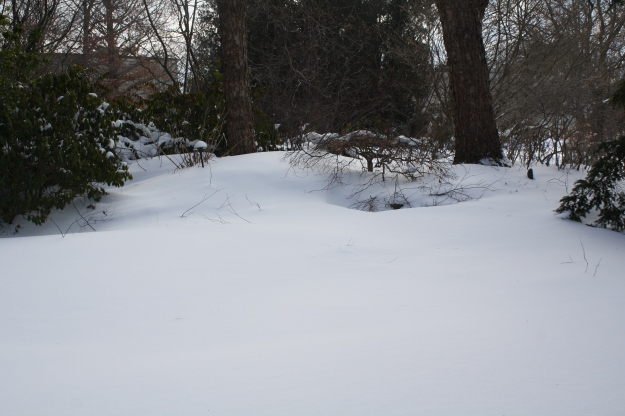 snow in garden