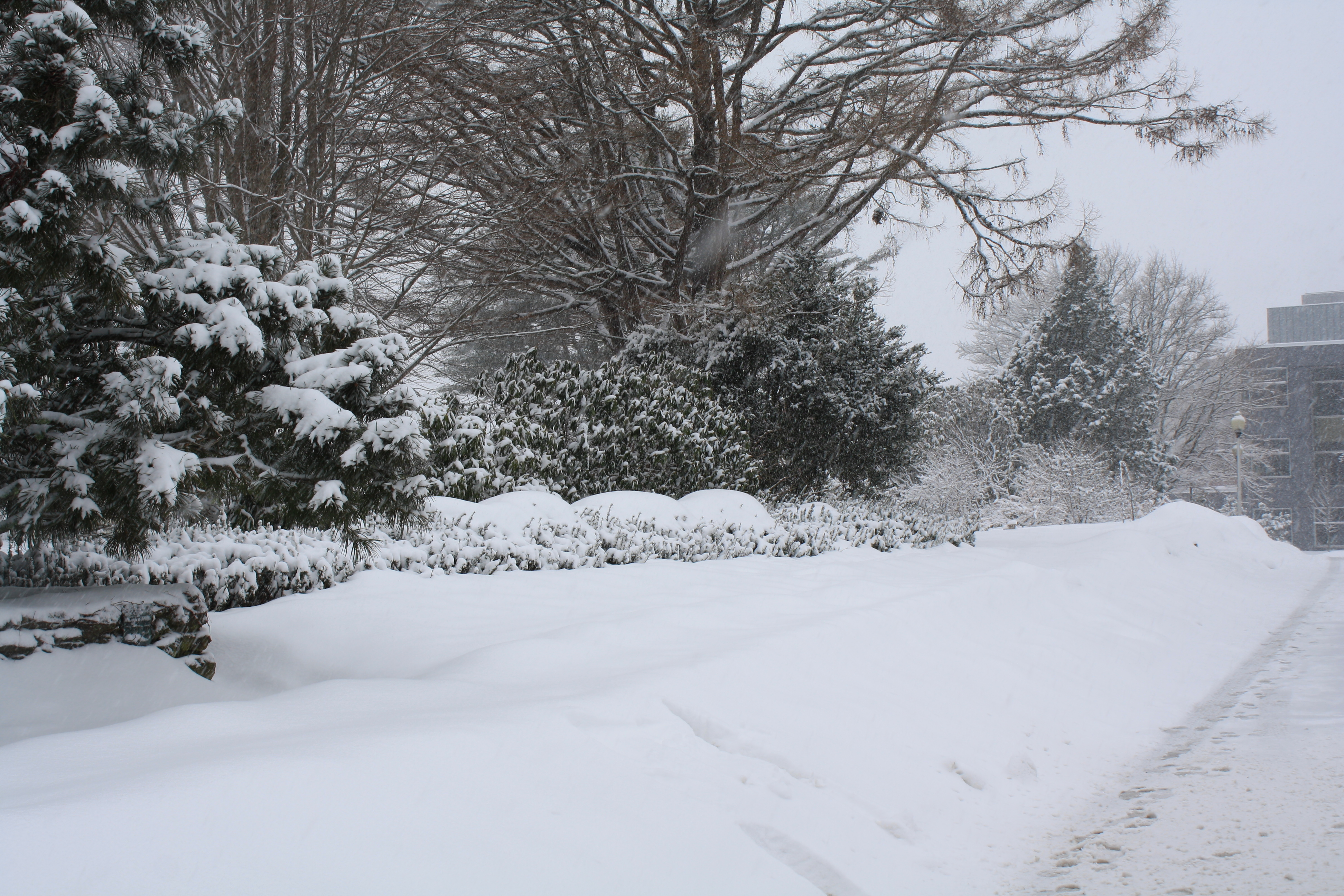 weather uri botanical gardens blog