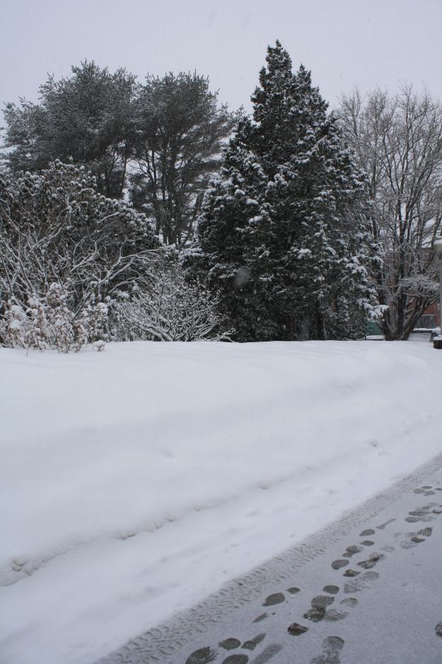 snow in botanical gardens
