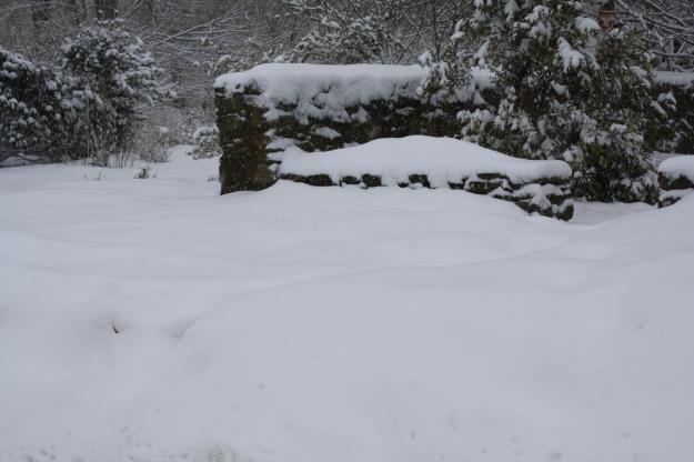snow in botanical garden